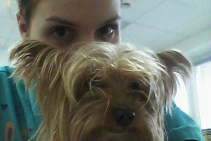 Уролитиаз (мочекаменная болезнь) кошек и собак.