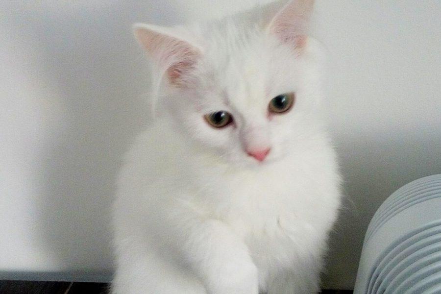 ОсЕнЬ – самое время завести кота!!!