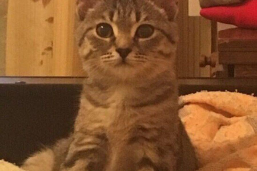 Котенок по ИМЕНИ Тося – Тоша!
